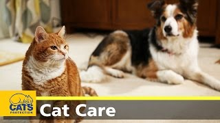 Download How to introduce cats to dogs Video
