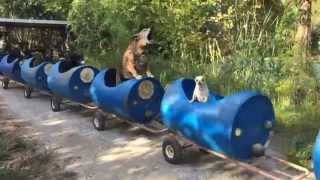 Download The Dog Train Rolls In Fort Worth Video