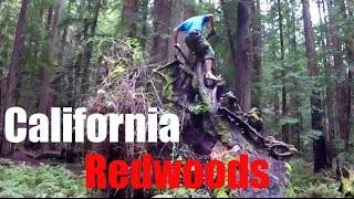 Download Exploring the California Redwoods: Tallest Trees in the World! Video