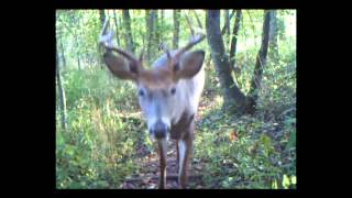 Download Trail Cameras: What You've Been Missing - Reality Deer Management Ep. 8 Video