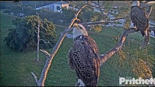 Download SWFL Eagles ~ Juvie Flies Over Nest ~ Harriet & M Watch 11.18.17 Video