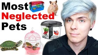 Download Pets People Often Neglect Without Knowing It Video