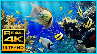 Download The Best 4K Aquarium for Relaxation II 🐠 Relaxing Oceanscapes - Sleep Meditation 4K UHD Screensaver Video