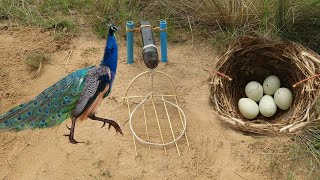Download Easy Bird Trap Using Microphone and Bird Nest Video