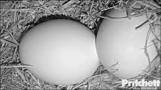 Download SWFL Eagles ~ Night Time View of Eggs; M15's New Spot 12.2.16 Video