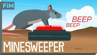 Download We use Rats to clear Minefields - Here's How Video