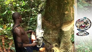 Download Indigenous People Under Threat From Deforestation Video