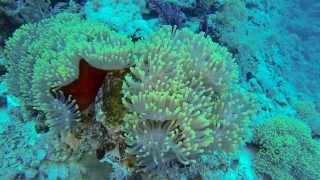 Download RED SEA DIVING SAFARI 2013-720 HD Video