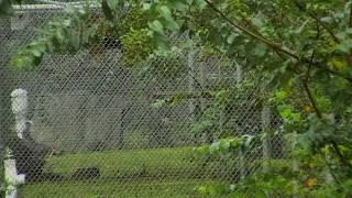 Download Bobcat Rehab and Release Cam 08-31-2018 15:34:25 - 16:34:26 Video