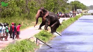 Download Faith in Humanity restored. An elephant stucked by a canal saved by humans Video