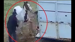 Download Pitbull attacks a horse and pays the price!!! Video
