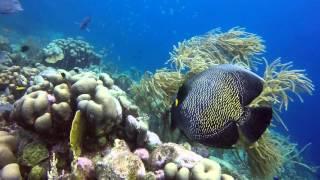 Download Bonaire Diving January 2016 Video
