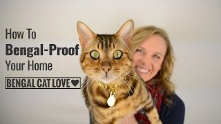Download Bengal Cat Personality - How to Bengal Proof Your Home Video