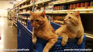 Download Cats Trained Off Leash Visit #PetSmart with Bonus Scene at Home Video