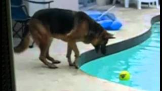 Download perro cae al agua de la piscina caida fail /dog falls into the pool water fall fail Video