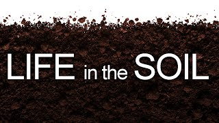Download Life in the Soil Video