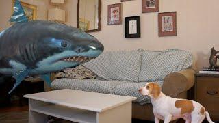 Download Dog vs. Shark: Cute Dog Maymo Video