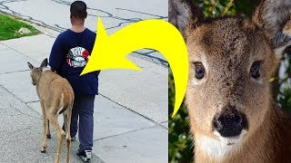 Download Neighbors Noticed That This Boy Walked A Deer Every Day. Then They Looked At The Animal's Eyes Video