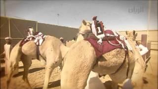 Download برنامج الريس - مهرجان سمو أمير البلاد المفدى لسباق الهجن العربية الأصيلة - الحلقة العاشرة Video