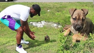 Download I Rescued A Lost Puppy On The Side Of The Road! Video