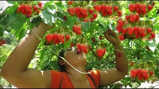 Download Survival skills Natural Finding strawberry fruit Food For eating delicious Video