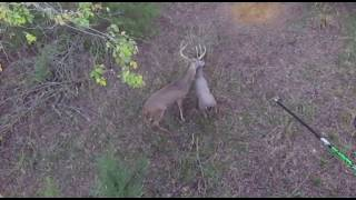 Download Big Buck can't resist Doe Decoy, better get you one / HeDog Archery Video