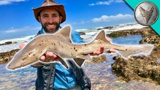 Download Catching a SHARK by HAND! Video