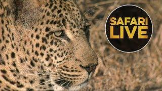 Download safariLIVE - Sunrise Safari - July 25, 2018 Video