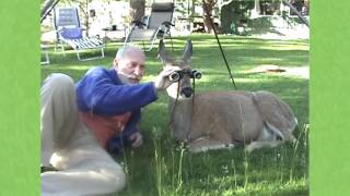 Download The passing of our wild deer friend Eva - 2002-2016 Video