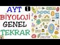 Download Lys Biyoloji Genel Tekrar-1 Video