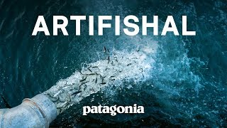 Download Artifishal Full Film | The Fight to Save Wild Salmon Video