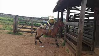 Download Montando en burro brabo Video