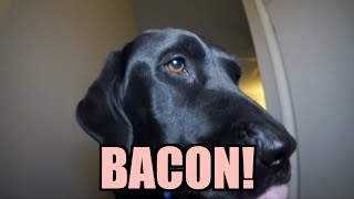 Download Talking Kitty Cat 27 - BACON! Video