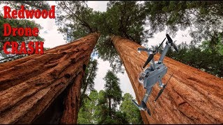 Download Crashing Into A Giant Sequoia Tree Can't Stop This Drone's Return To Home! Video