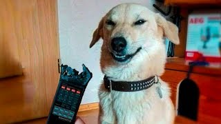 Download 🤣 Funniest 🐶 Dogs And 😻Cats - Try Not To Laugh - Funny Pet Animals' Life 😇 Video
