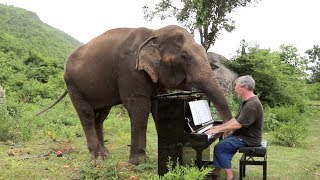 Download Beethoven on Piano for Romsai the Elephant Video