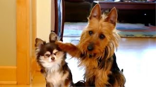 Download 😂 Funny Guilty Dogs 🐶 Compilation Video