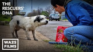 Download Fastest Rescue & Reunion of Lost Hungry Dog Ever Because of Microchip - Hope For Dogs | My DoDo Video