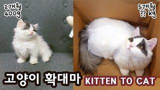 Download 고양이 확대마: 쵸비의 성장 KITTEN TO CAT: RAPID GROWTH Video