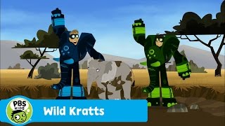 Download WILD KRATTS | Stuck in the Mud | PBS KIDS Video