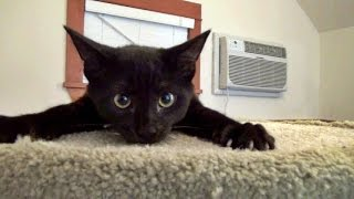 Download Blackberrie & Sabine and The Cat Tree - Foster Kittens Vlog #3 Video