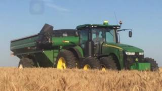 Download Frederick Harvesting wheat harvest 2016 Video