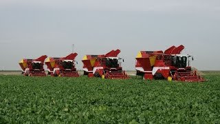 Download Beet Harvest XXL | 4x GRIMME MAXTRON 620 | self-propelled Beet Harvesters Video