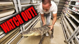 Download I CAUGHT AN ALLIGATOR!! | The King of DIY Video