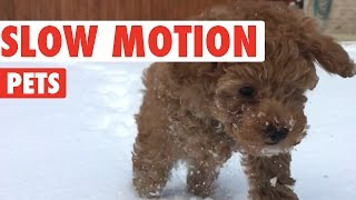Download Amazing Slow Motion Pets Video Compilation 2016 Video