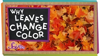 Download Why Do Leaves Change Colors in the Fall? Video