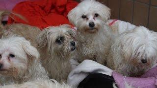 Download Tierheim Wau-Mau-Insel: Sieben Hunde suchen ein neues Zuhause Video