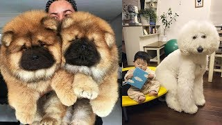 Download THE MOST BEAUTIFUL DOG BREEDS In The World Video