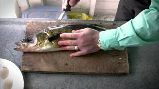Download How to fillet Walleye - Walleye Cleaning Video