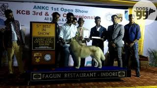 Download Indore Dog Show | Results- 1st Open Show | 1st Oct 2017 | Dogs99 Video